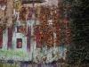 graffiti, les rails et le lierre